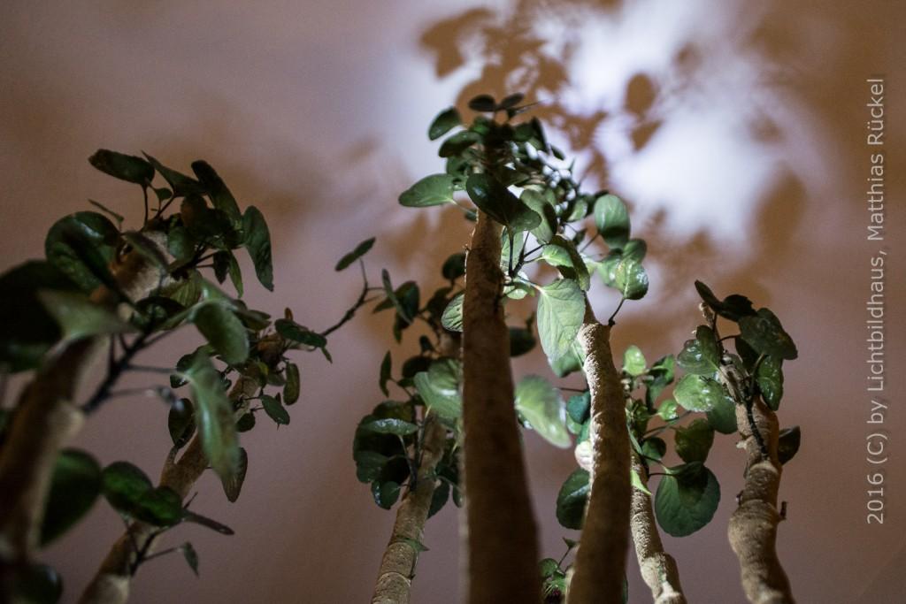 MissionFoto 02: Wilde Froschperspektive