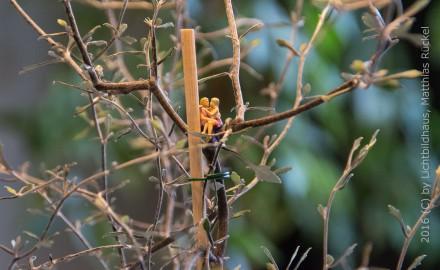 Liebe im Knickbaum