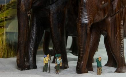 Elefanten? Wo sind hier Elefanten?