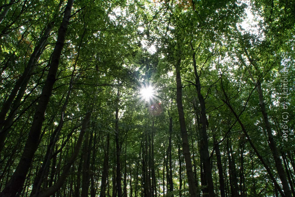 Wald bei Lohme