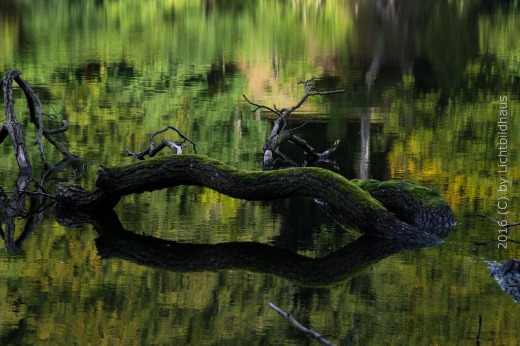 Teich im Königstuhler Wald